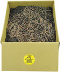 500 Baby Night Crawlers packed in a cardboard container in dirt