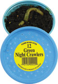 12 Green Night Crawlers packed in a plastic container in dirt.