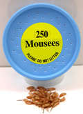 250 Mousees Packed in plastic container.