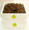 1000 Night Crawlers packed in 2 foam containers in worm bedding.